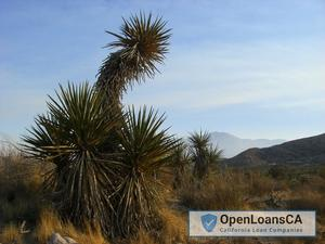 Morongo Valley